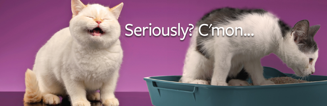 Image of an unhappy cat next to another cat in a litter box