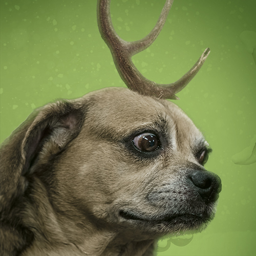 grinch dog with antler