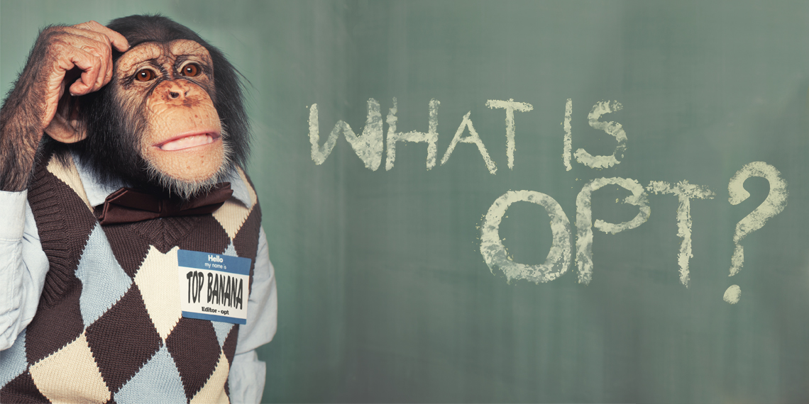 "Hero image for article ""What is OPT? - The Philosophy of OPT"". A monkey in a sweater scathing his head."